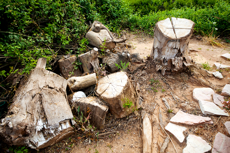 Firewood for Sale Canton