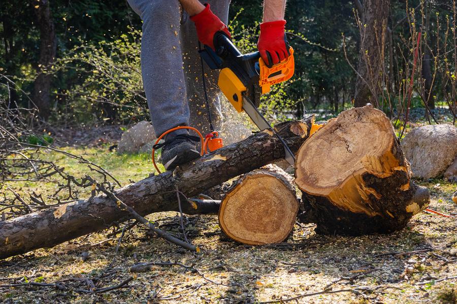 Canton tree removal